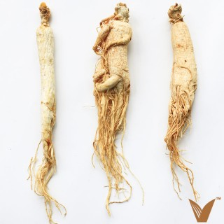 Asian Ginseng Root