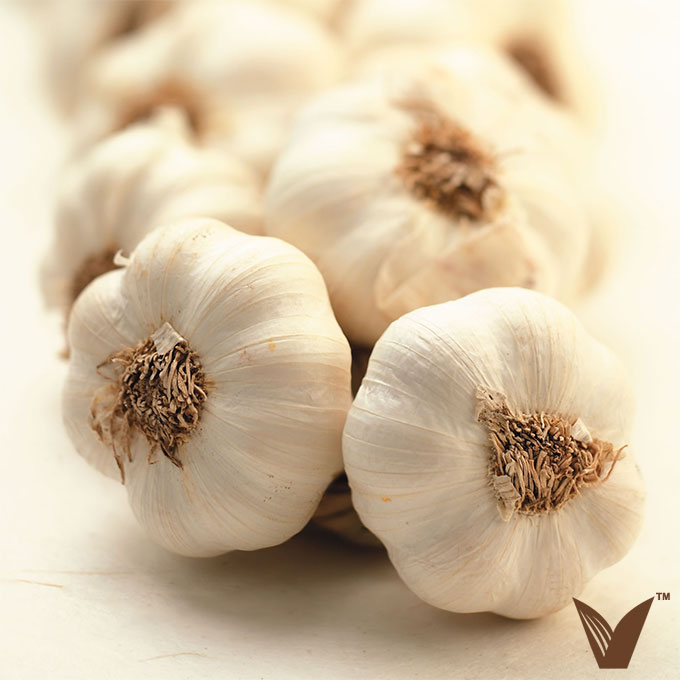 About Garlic